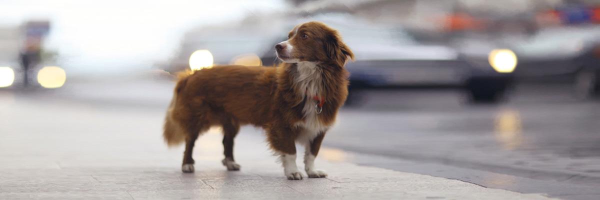 Un cane attraversa la strada provocando un incidente – caso fortuito